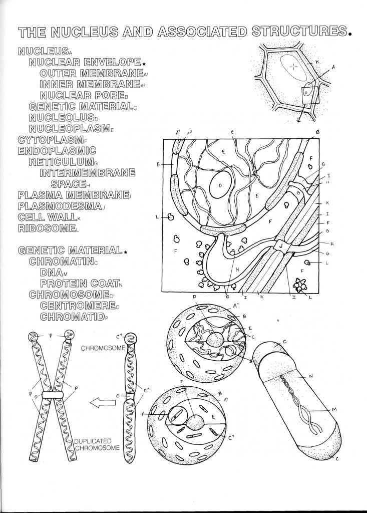 httpwwwcoloringconceptscomwp contentuploads - Botany Coloring Book