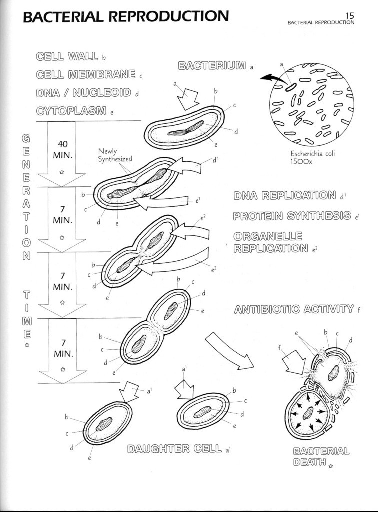Animal Cell Coloring Page Answers : Human cell coloring page. human heart coloring page with coded