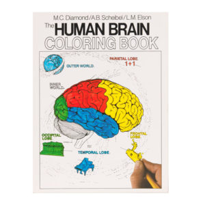 Coloring Concepts Human Brain Coloring Book