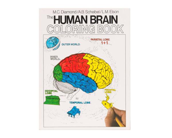 Coloring Concepts Human Brain Coloring Book