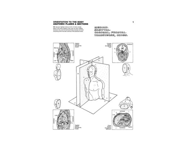 Coloring Concepts Anatomy Coloring Book