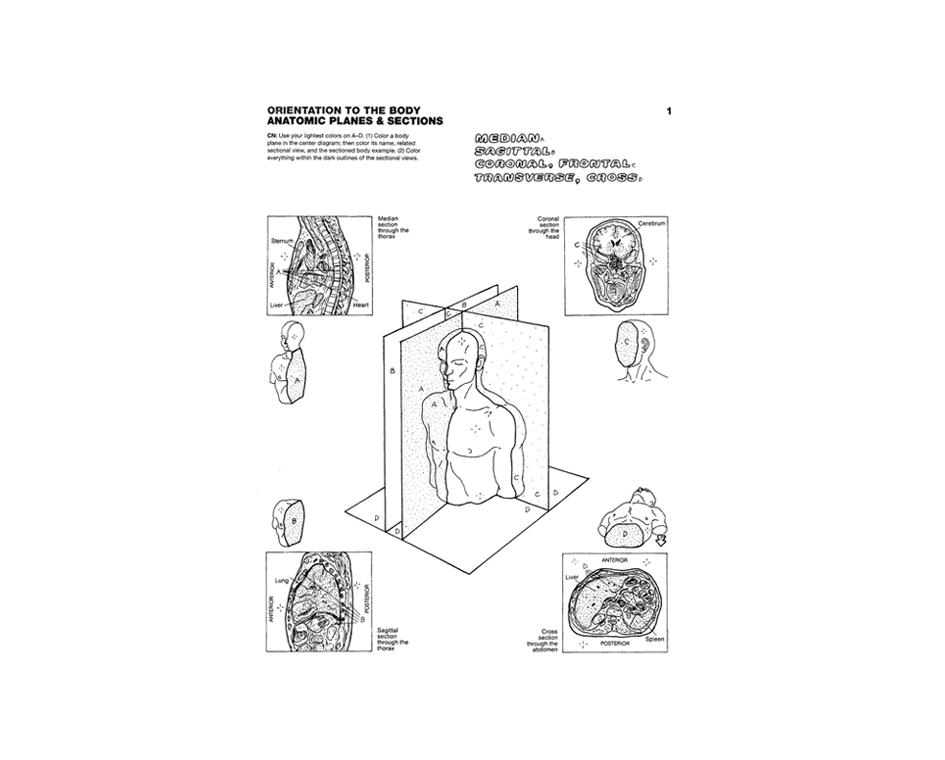 Anatomy Coloring Book, (4th Edition) Coloring Concepts, Inc.
