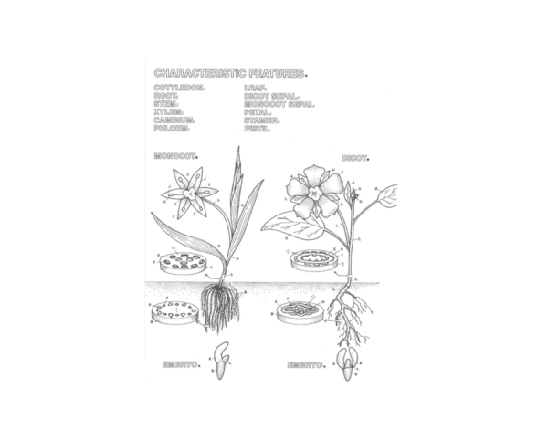 Coloring Concepts Botany Coloring Book