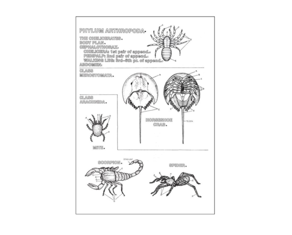 Coloring Concepts Zoology Coloring Book
